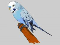 Bungy the Budgie