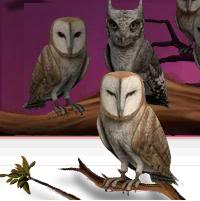 Pottermore Owls 5