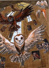 Owlery The Harry Potter Lexicon
